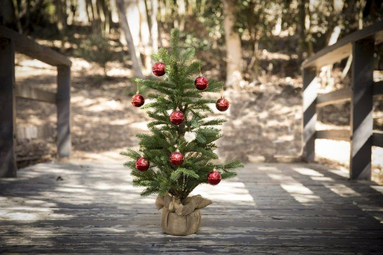 Volvo launches Christmas Tree rental service in Poland