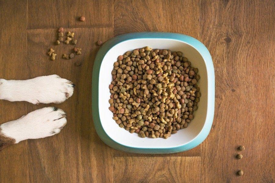 jedzenie dla psa