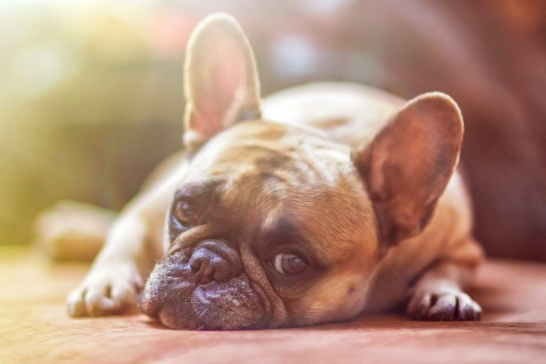 PMR survey: 90% of Poles buy dry food for their dog