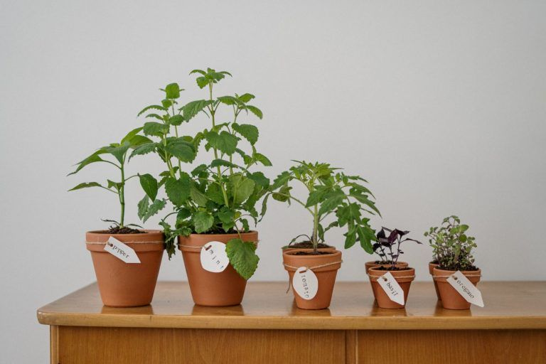 Castorama: by 2023 all plants will be sold in pots made of recycled materials